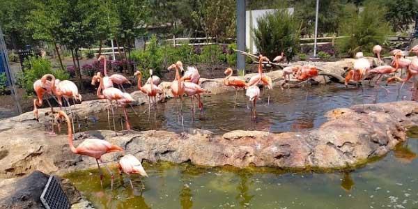 Stone-Zoo