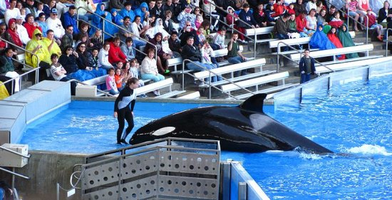 Discount SeaWorld Tickets - OrlandoFunTickets.com