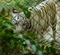 Lucknow Zoo visiting hours