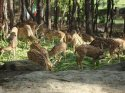 Malsi Deer Park visiting hours
