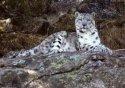 Himalayan Nature Park visiting hours